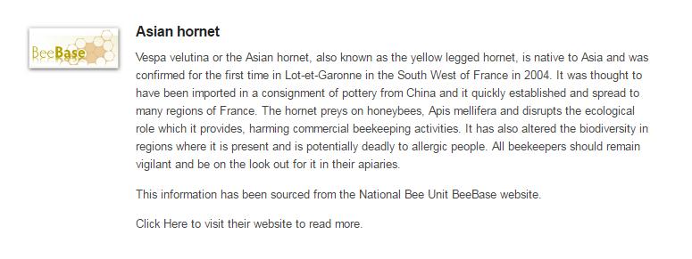 asian-hornet-alert